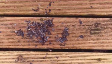 How to Choose Best Outdoor Wood Sealer for Your House